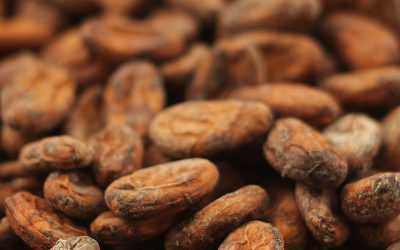 Cacao de Excelencia 2021
