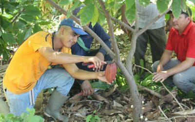 Coop. Barra Ciega entre los 50 mejores cacaos del mundo